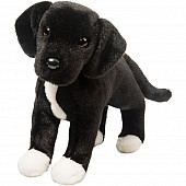 Douglas Twister - Black Lab/Pit Bull Mix Rescue Pup