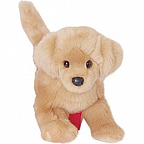 Douglas Dog: Bella Golden Retriever