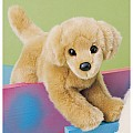 Sandi Mini Floppy Golden Retriever
