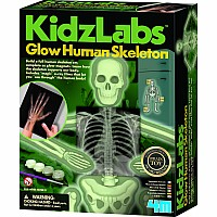 Glow Human Skeleton Kit