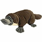 Platypus Stuffed Animal - 12""