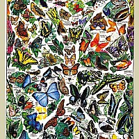 Butterflies of the World Jigsaw 1000pc